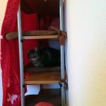 Pflegestelle im Katzen-Tempel