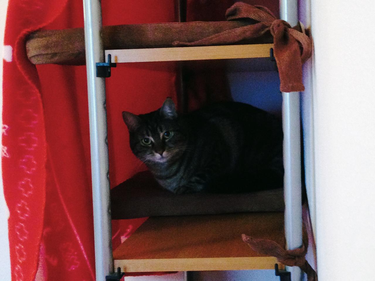Maja testet das Regal-Versteck